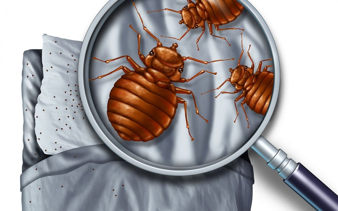 Pest Control Tip: Bed Bugs