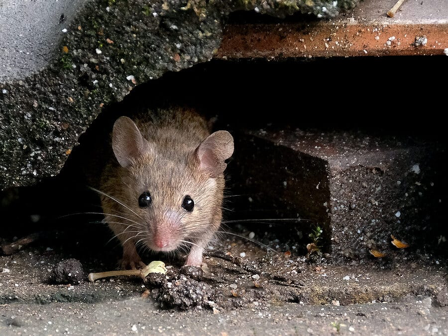 Pest-Proofing Tips for Fall and Winter